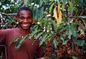 タンザニアコーヒー畑と人