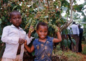 コーヒー畑の子供たち
