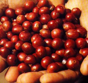 カフェアフリカ・バラカのコーヒー豆